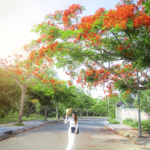 Chụp hình áo dài hoa phượng tại hcm